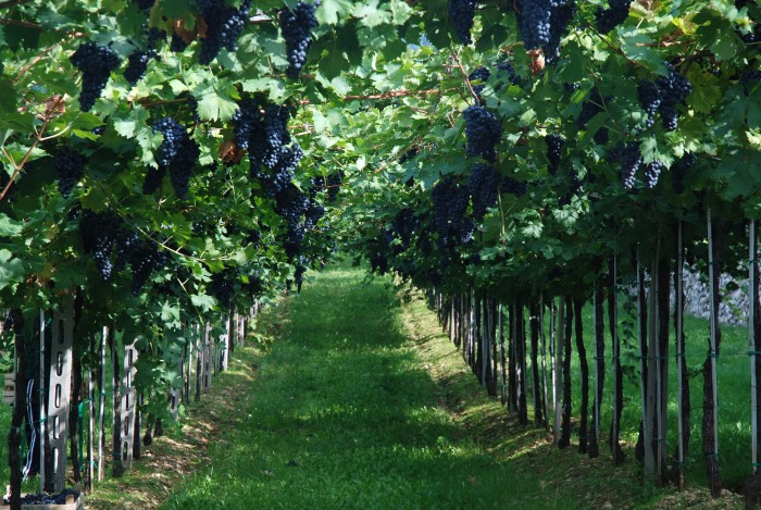 vino_vigneti_sicilia