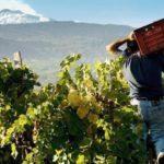 vino dell'Etna
