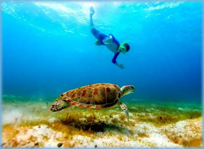 una tartaruga caretta caretta nelle aree marine protette della sicilia